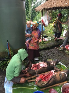 Getting ready for the 50th Anniversary mumu (traditional PNG feast).